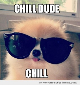 funny-chill-out-dog-sunglasses-pics