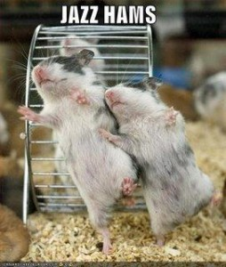 polls_funny_pictures_jazz_hamsters_2139_462445_poll_xlarge